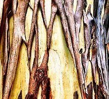 Peeling gum-tree revealing new bark. by ronsphotos