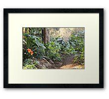 Down the garden path Framed Print