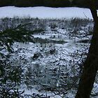 Patient Nature (discarded shopping trolleys among snow) by armadillozenith
