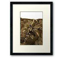 waiting to be worn... Framed Print
