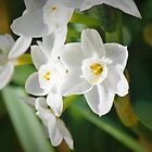 Jolly jonquils by xtie