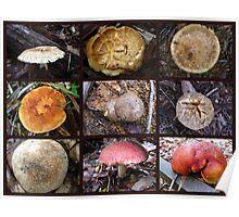 FNQ Fungi Poster