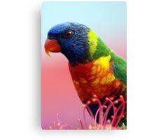 Rainbow Lorikeet - NSW Canvas Print