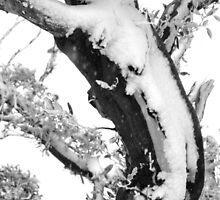 Gum Tree in the Snow by JeniNagy