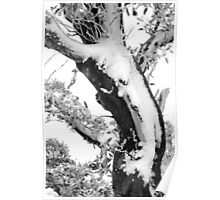 Gum Tree in the Snow Poster