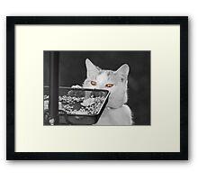 Bird Table Thief Framed Print