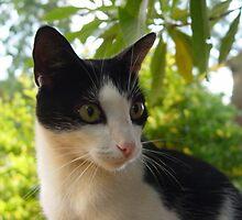 My cat by Annabella