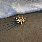 Starfish by Foam by Karen Checca