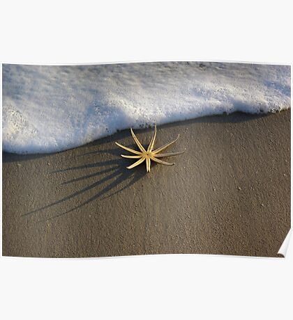 Starfish by Foam Poster