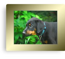 Dexter in serious thought Canvas Print