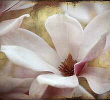 Magnolia by Chris Armytage™