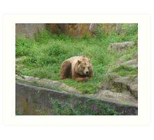 "a happy bear in"" Bearlin"" Art Print"
