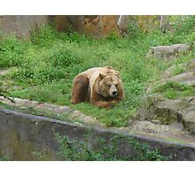 "a happy bear in"" Bearlin"" Photographic Print"