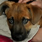 Puppy Dog Eyes by cebrfa