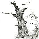 Old Oak by Jeno Futo