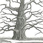 Old Oak2 by Jeno Futo