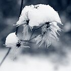 Snowhat by Tanja Katharina Klesse