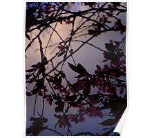 Twilight Blossom Poster