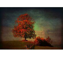 Majestic Linden Berry Tree Photographic Print