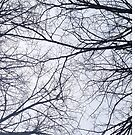 Tree branches by Roxy J
