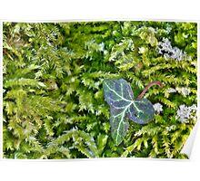 Single Ivy Leaf Poster