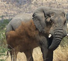 Elephant bull taking a dust bath by JohanVerster