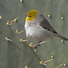 Verdin Side Portrait  by Judy Grant