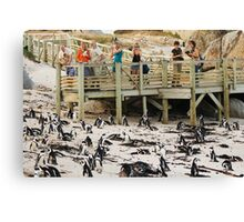 Boulders Beach - South Africa Canvas Print