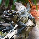 Water Dragon in Reptile House at Melbourne Zoo by Keith Richardson