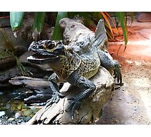 Water Dragon in Reptile House at Melbourne Zoo Photographic Print