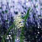 Starry, starry lights by Susanne Van Hulst