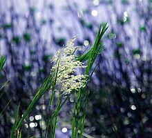 Starry, starry lights by Susanne Van Hulst