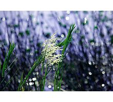Starry, starry lights Photographic Print