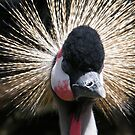 Crested Crane by ElsT