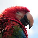 Red and Green Macaw by ElsT
