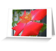 Single Rose. Greeting Card