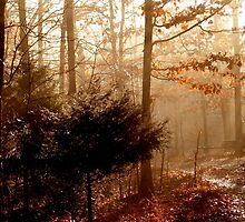 Essence Of Orange by NatureGreeting Cards ©ccwri