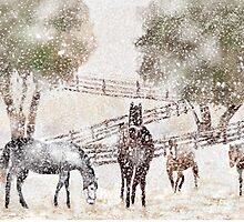 Snowy Pasture by arline wagner