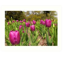 Tulip Time Art Print