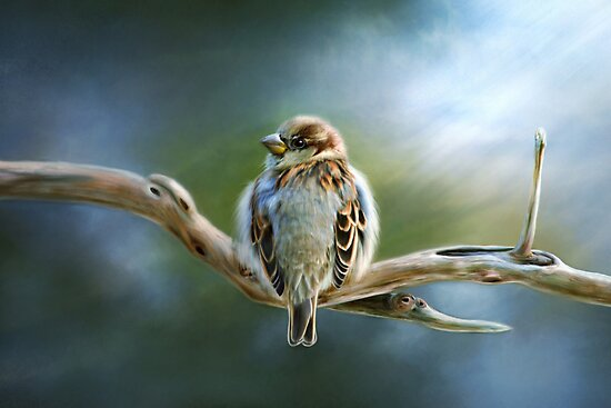 English-House Sparrow by Renee Dawson