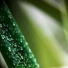 summer rain by Anthony Mancuso