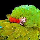Military Macaw (Ara militaris) by Eyal Nahmias