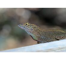 Crested Anole Photographic Print
