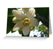 Grapefruit Blossom Greeting Card