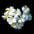 Frangipani Magic by Andrew Wilson