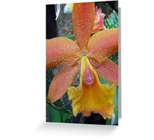 Glass Orchid # 2 Greeting Card
