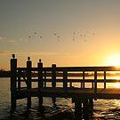 Dock Life by Jake Freeedman