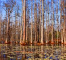 Trees in the swamp of Cypress Gardens SC Sticker