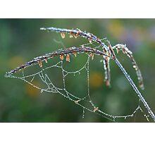 Dew Covered Web on Big Blue Stem Photographic Print