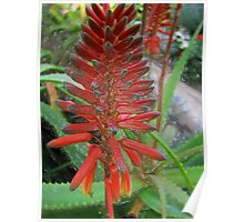 Glass Aloe Spike Poster